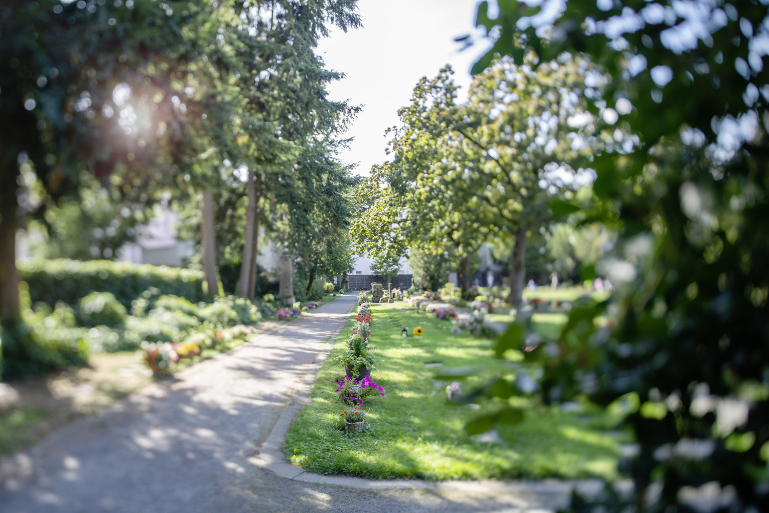 Alter friedhof erdgraeber